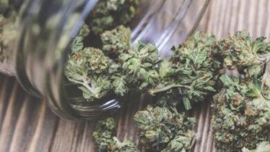 Photo of 'Cannabis can reduce Covid-19 economic shocks'